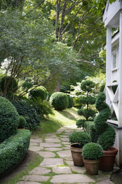 boxwoods and garden